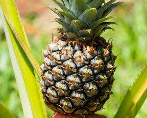 Pineapple_Raw Juicing and Detox Orlando Juice Bar